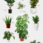 Decorating with Nature #wohnzimmer Decor Home, Living Rooms, Plants Living, Hang...