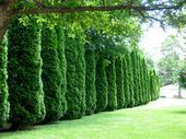 Living Fenceshow to create privacy with plants and shrubs #schnellwachsendepflan…