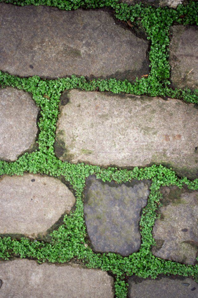 What to Plant Between a Flagstone Path | Hunker