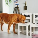 Who let the dogs out? This diy feeding station makes your animal friend and help...